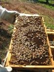 Bees - Frame2