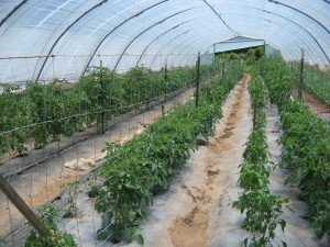 Firefly Farm Hoop House